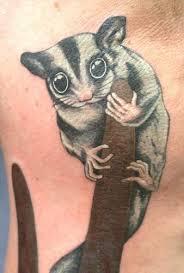 australian sugar glider petaurus breviceps tattoo tattoos