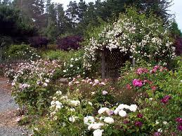 Fort Bragg Botanical Garden Heritage Garden Collections Mcbg Inc 2018 Fort Bragg