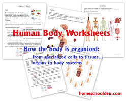 free human body organization pack cells tissues organs systems