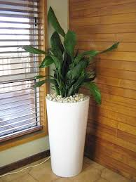 Green Ideas For Your Home Interiors Decorating With Indoor Plants - Home decoration plants