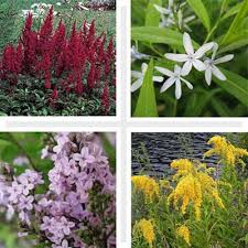 12 Best Annual Flowers For by 12 Best Plants For Black Thumbs Plants Weather And Gardens
