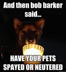 Dog At Vet Meme - dog castration meme castration best of the funny meme