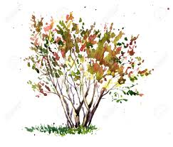 cherry blossom tree drawing by watercolor aquarelle sketch of