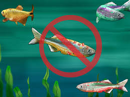 Types Of Aquarium Fish 3 Ways To Choose Fish For A Freshwater Aquarium Wikihow