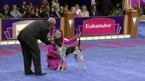 thanksgiving day dog show 2015 akc eukanuba national championships december 12th u0026 13th