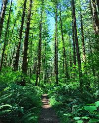 Oregon forest images Free photo tillamook state forest oregon free image on pixabay jpg