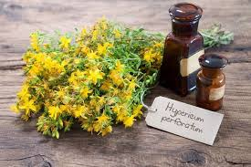 what side does a st go on benefits and risks of st john s wort for depression be brain fit