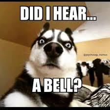 Psychology Meme - did i hear a bell meme psychmob