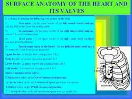 Anatomy Of Heart Valve Surface Anatomy Of Heart And Valves Youtube