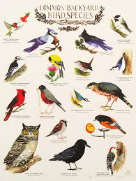 how to attract backyard birds ace hardware pictures with