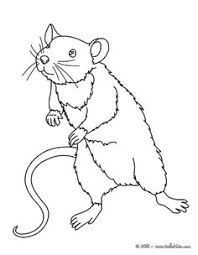 coloring page of a rat rat animal coloring pages mouse mouse to color in vitlt com