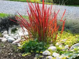 29 best ornamental grasses images on ornamental