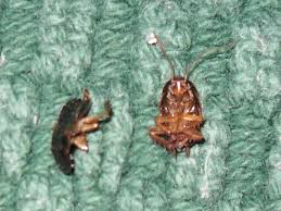 Rug Bugs Two Dead Bugs On A Rug By Dreamerforlife On Deviantart