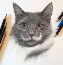 pencil cat fast sketch by atomiccircus on deviantart