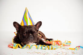 Wallpaper Dog Happy Birthday Dog Hd Desktop Wallpaper Widescreen High