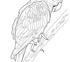 parrot coloring coloring pages adresebitkisel