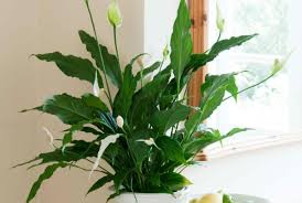 plant house plants low light stunning indoor house plants low
