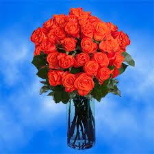 Blue Roses For Sale Bright Orange Roses For Sale Super Wow Roses Global Rose
