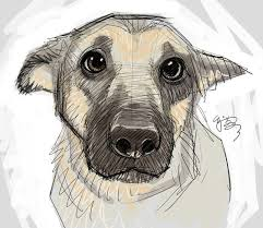 best 25 cute dog drawing ideas on pinterest puppy drawing dog
