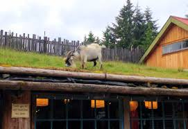 spotted goats on the roof garden therapy