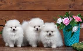 dog wallpapers dog wallpaper hd get hd wallpapers free