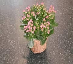 Flowers In Denton - plants delivery denton tx denton florist