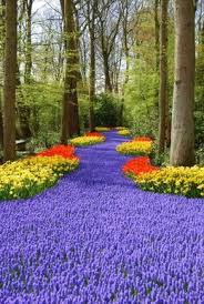 114 best flowers images on pinterest plants flowers and