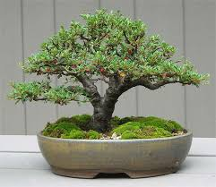 bonsai pots that will fit a small tree gardening tips n ideas