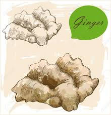 Ginger Doodle 760 Root Ginger Cliparts Stock Vector And Royalty Free Root