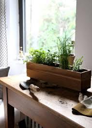 window herb gardens urban gardening shade tolerant herbs to grow in your apartment