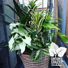 succulents container crazy ct