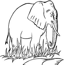 free elphant coloring sheet printable clipart clipground