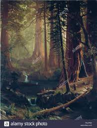 albert bierstadt redwood trees of california berkshire
