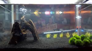 Tank Aquascape 10g Shrimp Tank Aquascape Suggestions Aquariums