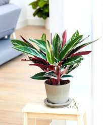 house plants that don t need light house plants that don t need light fooru me