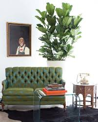 your new go to guide to indoor gardening is here the accent