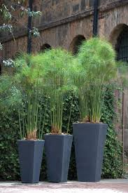 tall green plants in my blue planters best balcony planting for