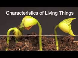 Characteristics Of Living Things Worksheet Middle Characteristics Of Living Things What Makes Something Alive