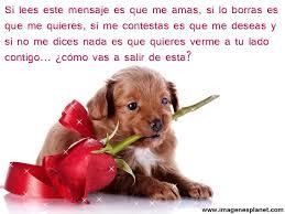 imagenes tiernas y romanticas imágenes tiernas de mascotas con frases románticas de amor find