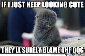 Meme Cute - cute by suzuli meme center