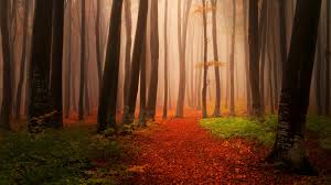 fantasy autumn wallpaper wallpaper autumn forest foggy misty hd nature 3226