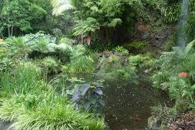 native plants to new zealand a new zealand garden a yorkshire garden designer