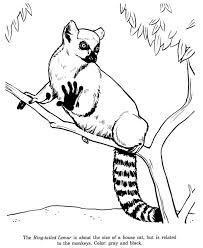 coloring trendy lemur coloring madagascar 2 mort