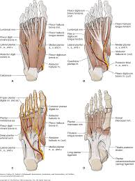 Tibiofibular Ligament Injury Chapter 21 The Ankle And Foot Dutton U0027s Orthopaedic Examination