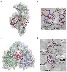 ijms free full text making the bend dna tertiary structure