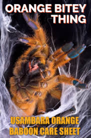 orange bitey thing obt usambara baboon tarantula care sheet