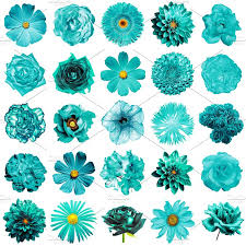turquoise flowers 25 turquoise flowers isolated nature photos creative market