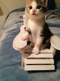 Funny Kitten Memes - 39 overly adorable kittens to brighten your day