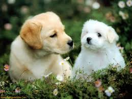 Dog Wallpapers Download Puppy Dog Wallpapers Gallery