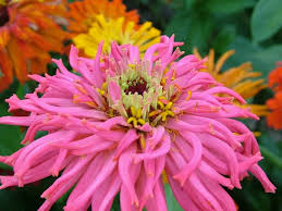 download free beautiful natural world pictures of flowers the